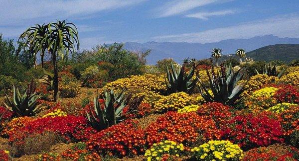 Một châu Phi khác lạ với vườn bách thảo quanh năm khoe sắc