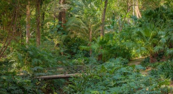 Có một ốc đảo ẩn mình trong vườn bách thảo ở nơi nóng và khô nhất Tây Ban Nha