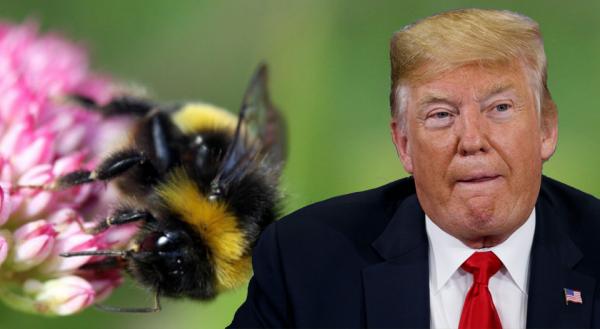 Mỹ: Truyền thông biến bản ghi nhớ về GMO và thuốc trừ sâu thành vũ khí chống Trump