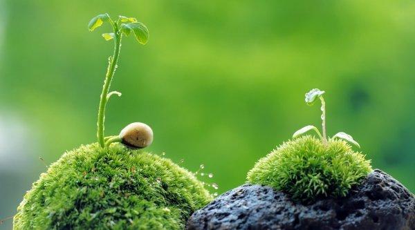 Cây cối giao tiếp với nhau bằng những cách thức đáng kinh ngạc