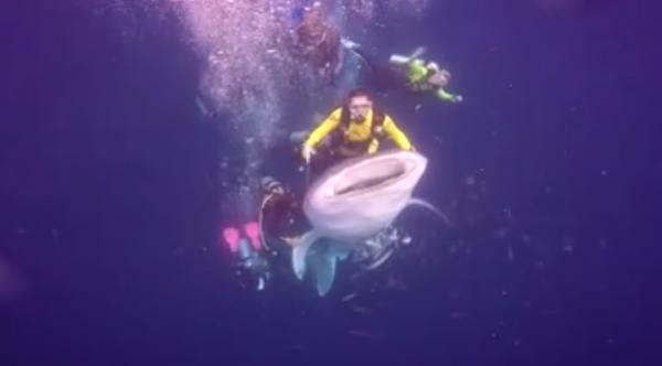 Nhóm thợ lặn cưỡi cá mập voi để chụp hình tự sướng