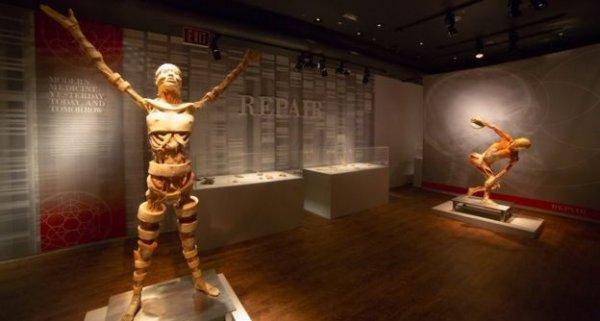 Triển lãm cơ thể người ở Australia: Tiến sĩ Mỹ yêu cầu giám định DNA để tìm em
