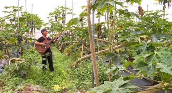 """""""Cao thủ"""" trồng đu đủ hữu cơ: Không cần diệt cỏ, chỉ cần ôm đàn và hát"""