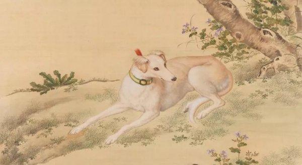 Loài chó đã làm gì Nỗ Nhĩ Cáp Xích mà người Mãn không bao giờ ăn thịt chó?