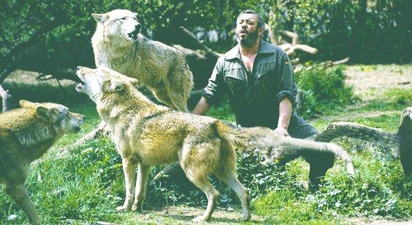 Người đàn ông kỳ lạ trở thành thủ lĩnh của bầy sói hung tợn