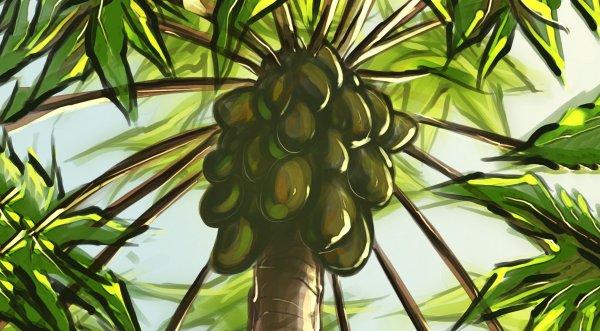 Truyền thuyết cây đu đủ Philippines: Papay cứu con bằng loại quả vàng chín ngọt