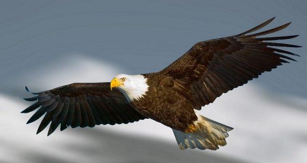 Đại bàng đầu trắng xuất hiện trong lễ tưởng niệm vụ khủng bố 11/9 ở Mỹ