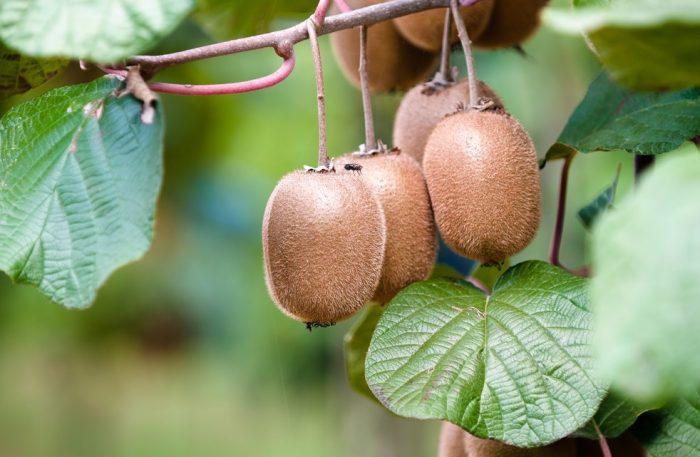 Tìm hiểu qua cách thức sinh trưởng khá thú vị của 11 loại thực phẩm.4