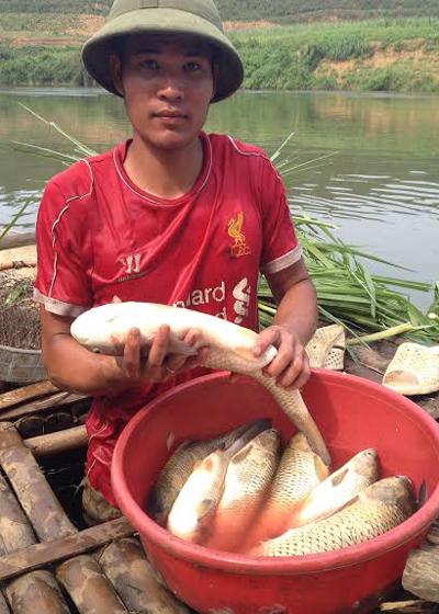 Sáng nay khi ra bè cá kiểm tra, anh Tuấn thấy nhiều con ngoi lên mặt nước thoi thóp rồi chết dần.