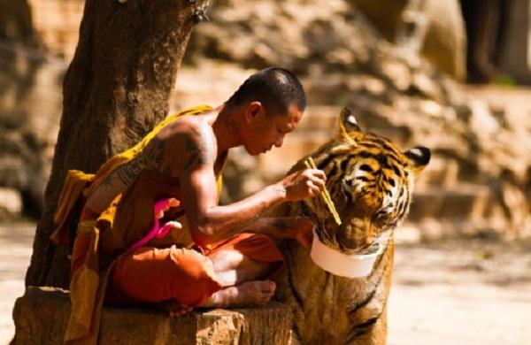 Hổ dữ sẽ ăn thịt động vật và những ai không đáng làm người. (Ảnh: Internet)
