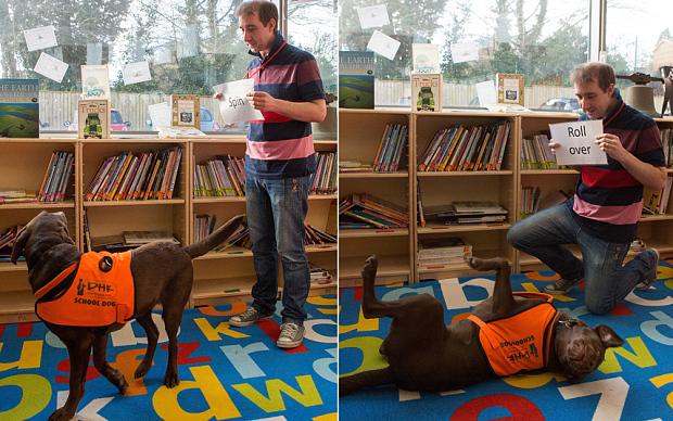 Chú chó nổi tiếng nhờ khả năng đọc chữ phi thường.