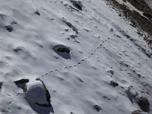 Những dấu chân bí ẩn nơi núi tuyết.