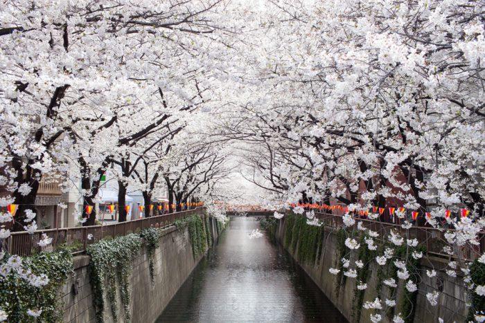 13 con đường đẹp như thơ khiến người ta mê đắm.1