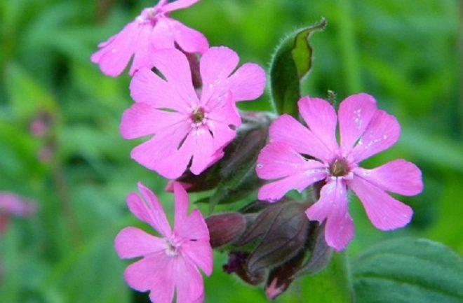 Chiêm ngưỡng 10 loài hoa hiếm gặp và đẹp nhất thế giới - H1