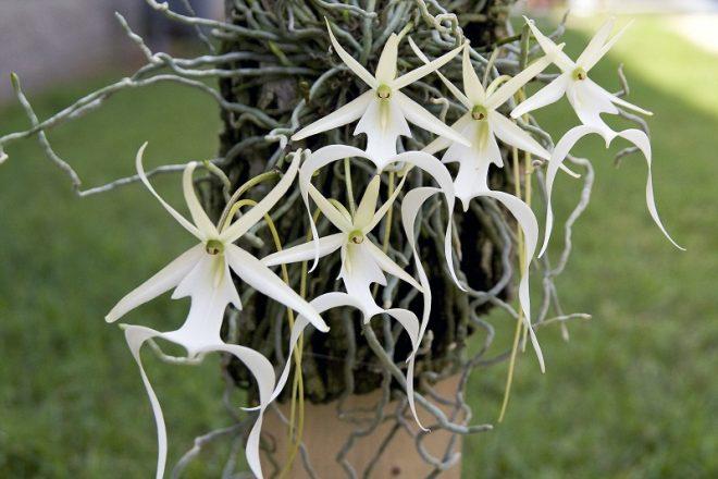 Chiêm ngưỡng 10 loài hoa hiếm gặp và đẹp nhất thế giới - H5