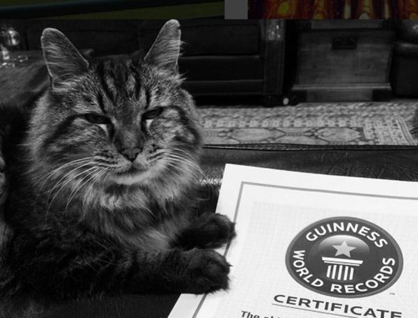Sách Kỷ lục Thế giới Guinness đã ghi nhận Corduroy hiện là chú mèo già nhất thế giới.
