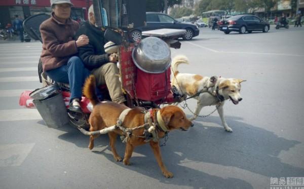 Cặp vợ chồng ngồi xe chó kéo đang gây sốt cộng đồng mạng.