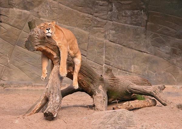 không có sức khỏe thì làm cái gì cũng mau mệt, mau mệt thì sẽ nhanh chán, mà nhanh chán thì sẽ sớm bỏ cuộc. (Ảnh: Internet)
