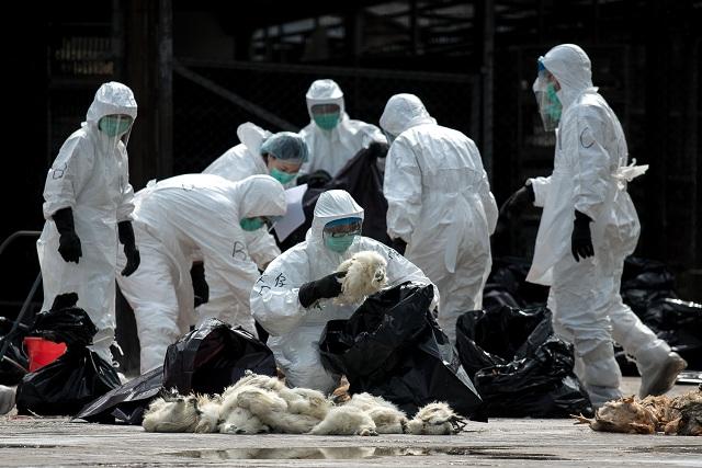 Phát hiện virus cúm gia cầm H7N9 tại Hong Kong. (Ảnh: Vancouversun.com)