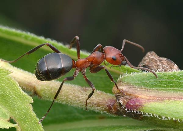 Loài kiến trong mơ đại diện cho những gì khó khăn, phức tạp đang thức thách bạn.