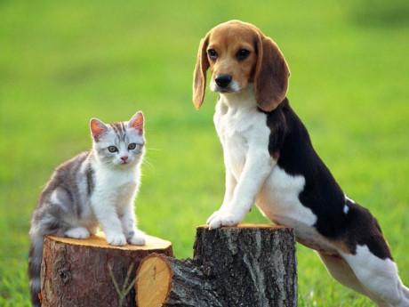 Giải mã ý nghĩa những giấc mơ về chó, mèo trong dân gian.