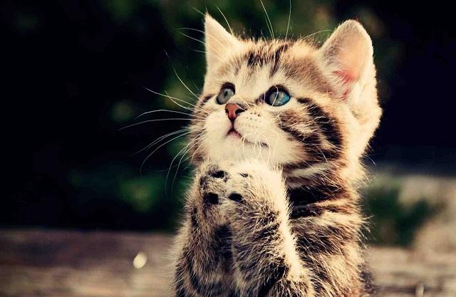 Người bệnh mơ thấy mình nuôi mèo là sắp thoát khỏi bệnh tật.