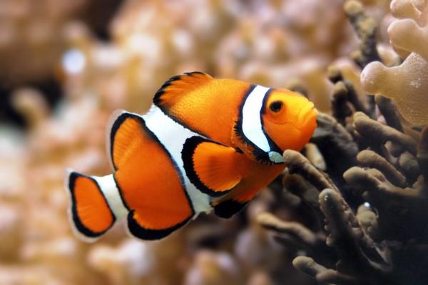 Nằm mơ thấy cá có điềm gì?