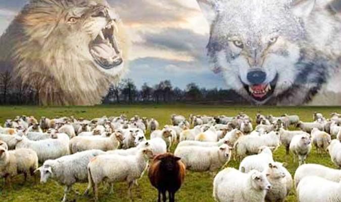 Cuốn sách dễ bán nhất tại Mỹ - Lựa chọn sói hay sư tử?