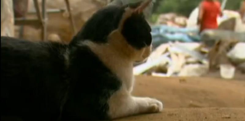 …mà còn là mèo… (Ảnh: Youtube)