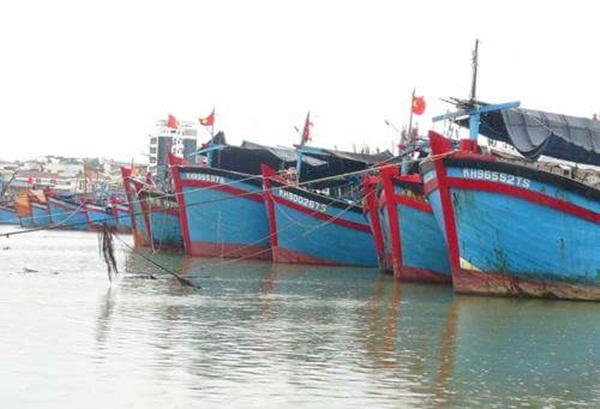 Tàu cá neo đậu ở Khánh Hoà tránh bão. (Ảnh: X.N)