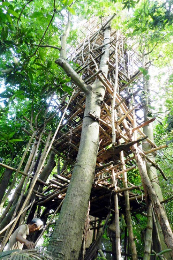 Cụ ông miền Tây chỉ thích ở trên… ngọn cây!2