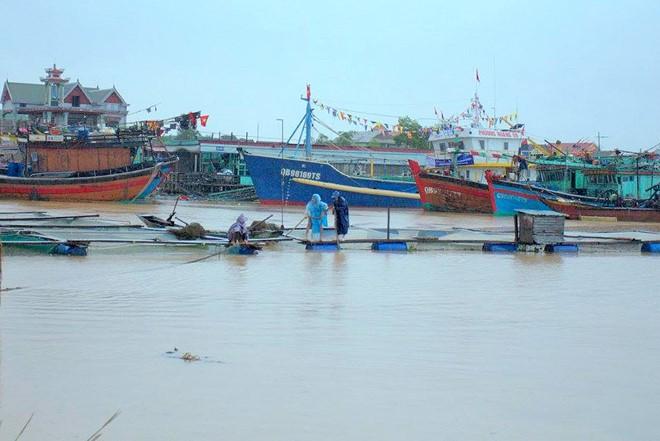 Người dân buộc giữ bè, lồng nuôi cá trên sông Gianh. Ảnh: CTV.