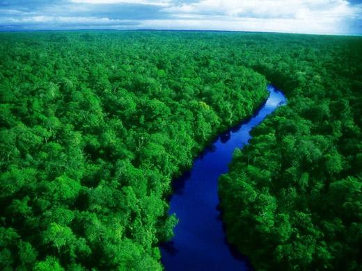 Amazon nhìn từ trên cao trông thật hiền hòa, nhưng bên trong nó lại ẩn chứa những điều kinh khủng nhất.