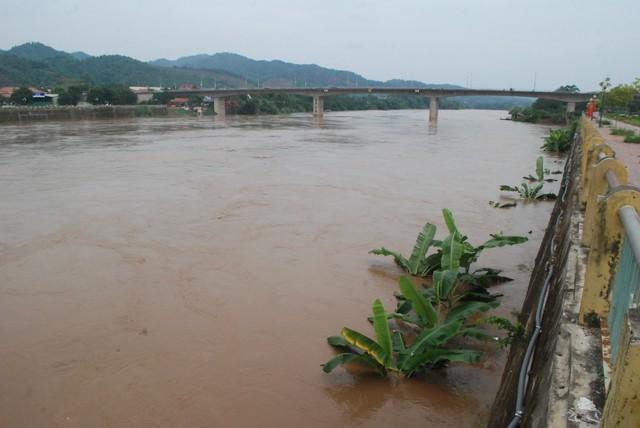 Nhiều diện tích hoa màu người dân gieo trồng ven sông Hồng ở thành phố Lào Cai bị ngập.
