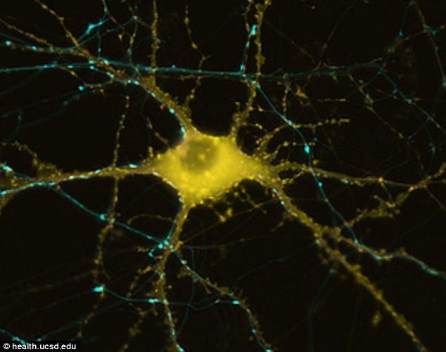 Ký ức đang được hình thành: hình ảnh một tế bào thần kinh đang đáp ứng với thông tin để lưu giữ ký ức trong não bộ