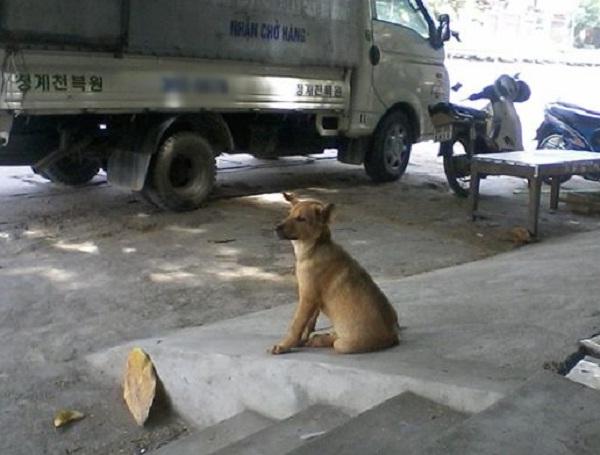 Chú chó đáng thương và đôi mắt buồn thảm.