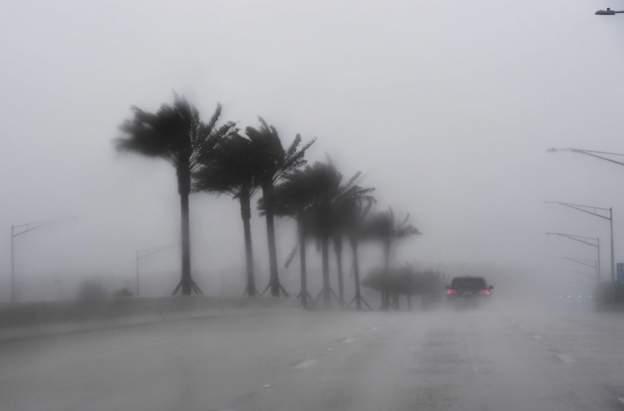 Hình ảnh từ Florida.