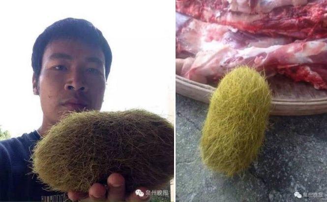 Anh Wuzhi phát hiện quả trứng lạ trong bụng lợn nhà mình.