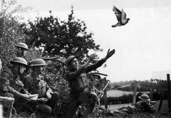 Những con vật nổi tiếng trong quân đội Mỹ Thế chiến I.2