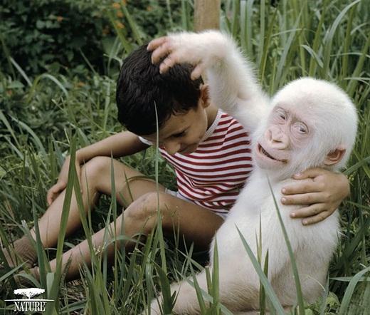 Ấn tượng trước những động vật bị bạch tạng đẹp như trong truyền thuyết.2