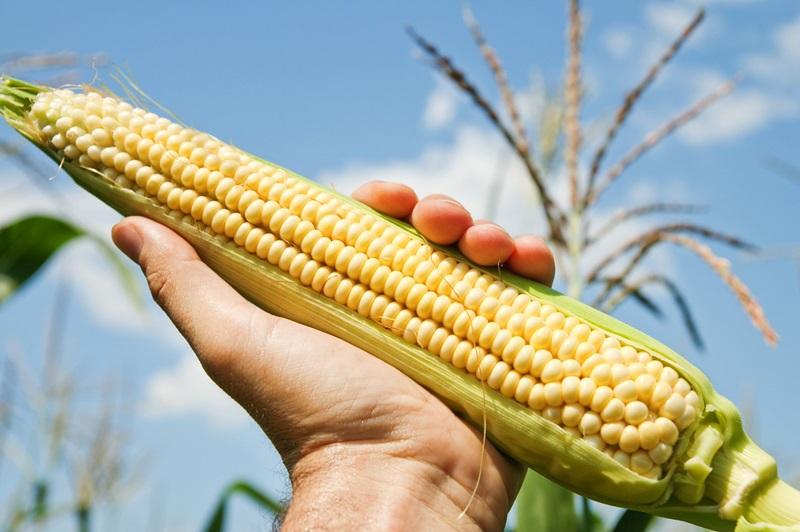 20151013150235-corn