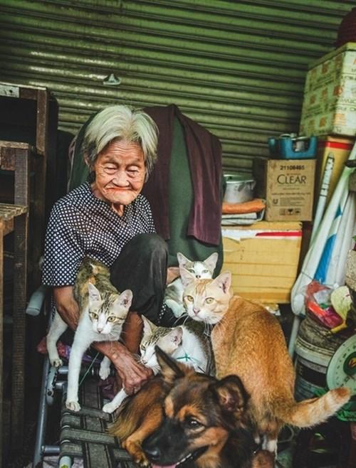 Chuyện cổ tích đời thường của bà cụ bán rau và bầy mèo hoang làm bao người thổn thức.