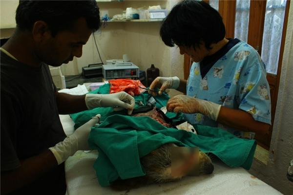 Cuộc phẫu thuật khâu mặt và loại bỏ xương cụt kéo dài 2 tiếng đồng hồ.