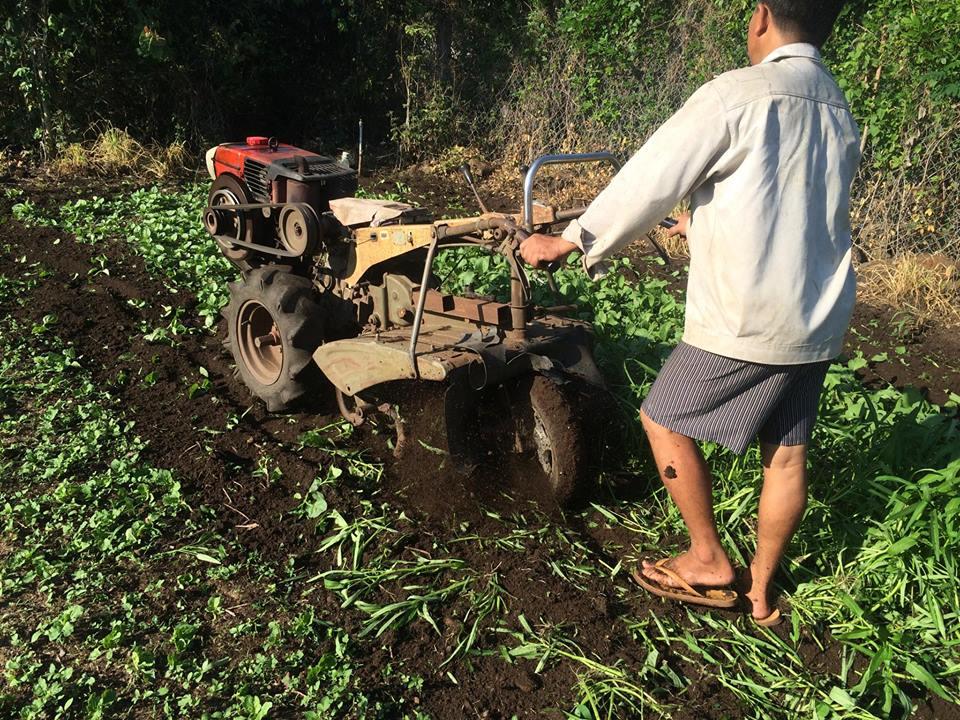 Anh Như Anh dùng máy cày phá toàn bộ vườn rau hữu cơ rộng 0,3ha.