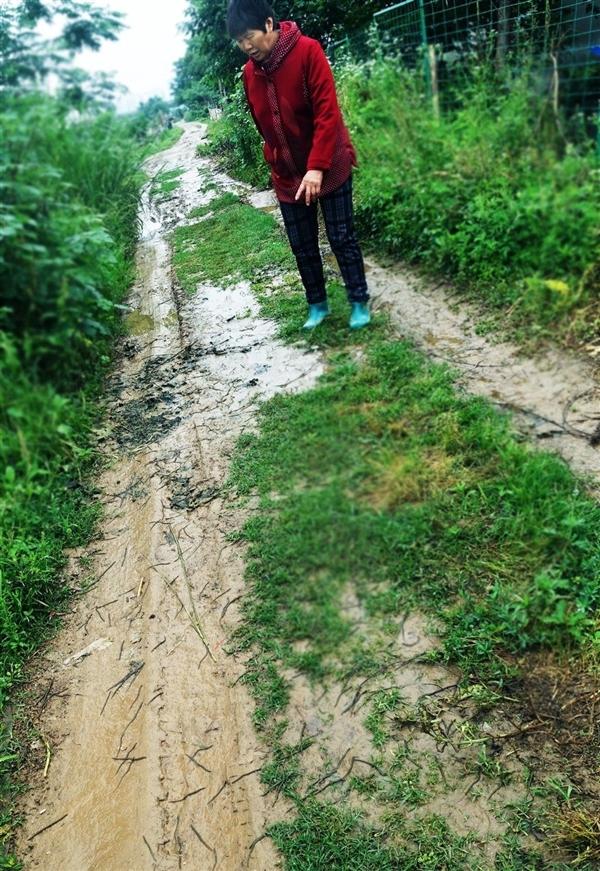 """Hàng ngàn sinh vật lạ """"xâm chiếm"""" mặt đường sau trận mưa lớn.6"""
