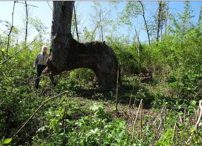 Bí ẩn chưa có lời giải đáp về thân cây uốn cong dị dạng