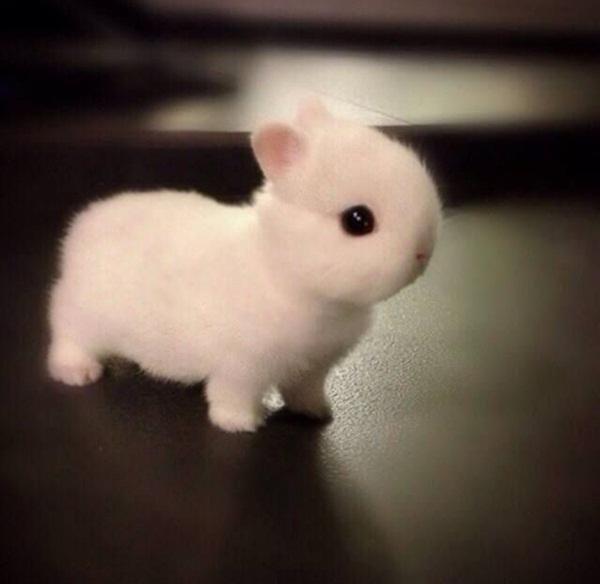 Cục bông hay thỏ con