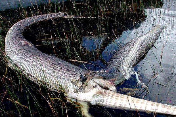Kết cục của hai con vật cạnh tranh trong môi trường sống tự nhiên.