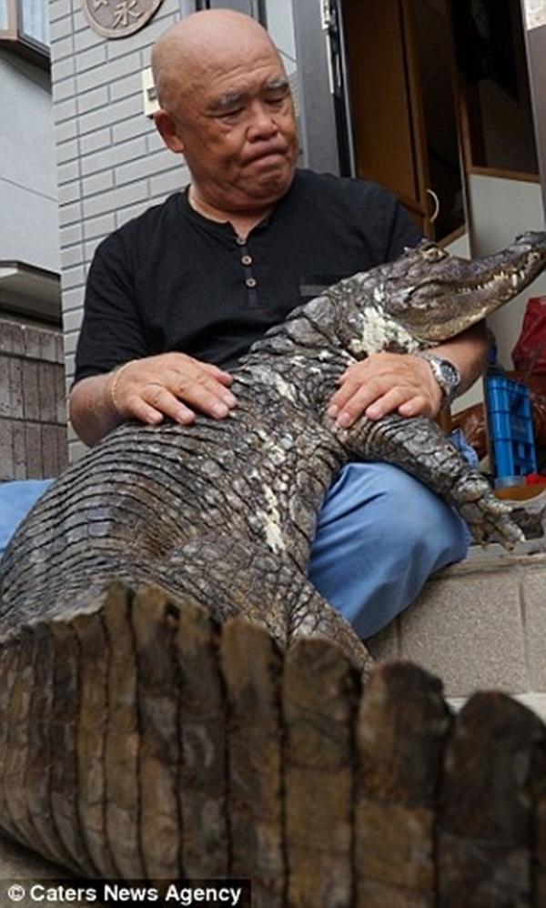 ...và kể từ đó chú cá sấu luôn gắn liền với ông không rời. (Ảnh: Internet)