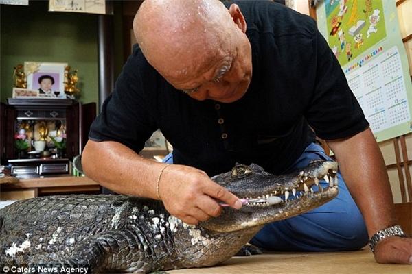 Hàng ngày ông đánh răng và tắm táp cho chú cá sấu. (Ảnh: Internet)